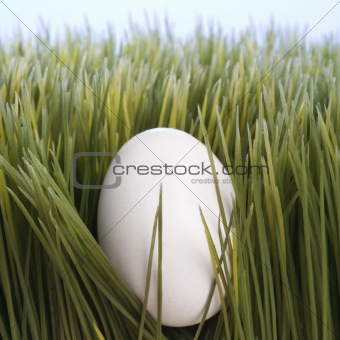 A white egg laying in grass.
