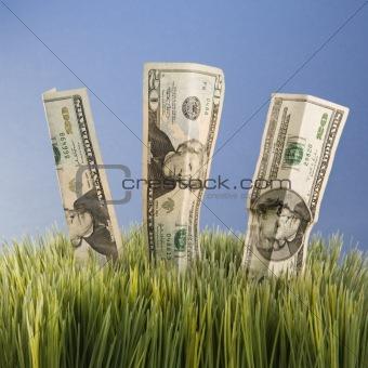 Three twenty dollar bill placed in grass.