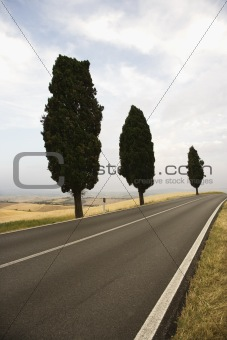 Three Mediterranean Cypress trees along rural road.