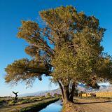 Tree by creek in rural setting of California.