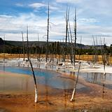 Shallow water pool at Yellowstone National Park, Wyoming.