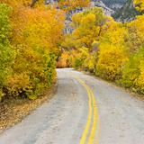 Road cutting through Aspen trees.