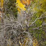 Dead tree amongst live foliage.