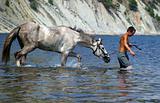 horse in sea