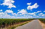 Road in a vineyard