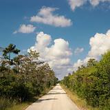 Road in Florida Everglades.