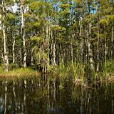 Wetland in Florida Everglades.