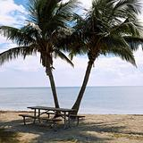Picnic table with palm trees on beach in Florida Keys, Florida,