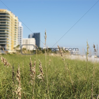 Beach grass and beachfront buildings in Miami, Florida, USA.