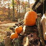 Pumpkins and firewood.