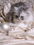 Christmas balls and cat