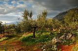Land of Messinia