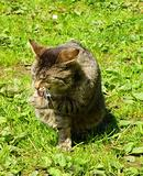cat on green grass