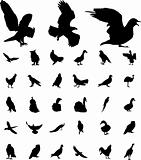 Set Birds