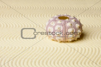 Calcareous skeleton of sea urchin on sand
