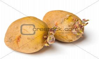 Potato seeds on white background