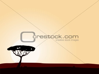 African safari background with acacia black tree silhouette