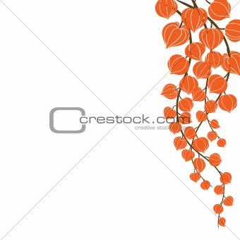 Beautiful orange flowers.Vector illustration