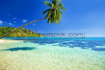 Palm tree hanging over lagoon with blue sky
