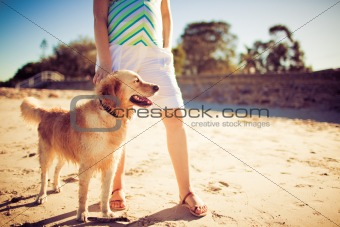 Golden retriever standing by legs of a woman