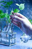 Scientist working in a laboratory and plants