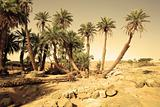 D`Oum Laalag Oasis