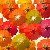 Olive and summer flower background