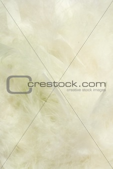 Background of fluffy creamy cloud-like feathers