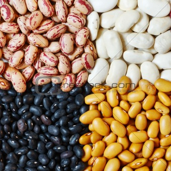 Beans in four colors