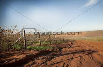 Swartland winter vineyard