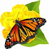Monarch butterfly on the flower