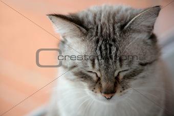 charmy feline having a rest