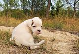 puppy white bower