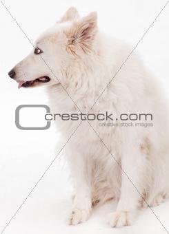 Beautiful dog sitting on the floor looking side way