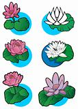 Set of 6 lotus flower