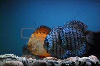 Fish fish and again fish