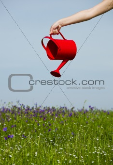 Watering the flowers