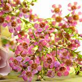 Smal pink Flowers