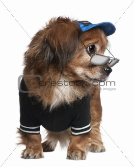 Crossbreed dog in clothes and glasses