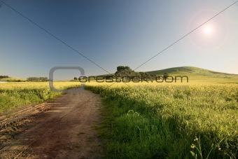 Canola Farm Scene
