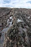 black rock pool seaweed horizon