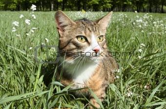 Cat in an ambush