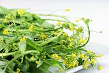 shot of baby greens with tiny yellow flowers