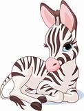 Cute Zebra Foal