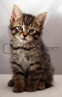 Adorable kitten 8