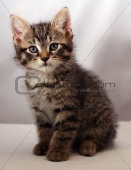 Adorable kitten 6