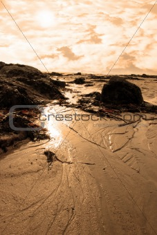 seaweed covered beach rocks at sunset
