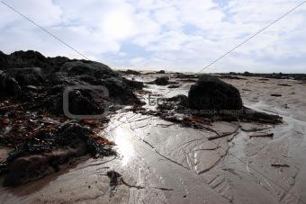 seaweed covered beach rocks