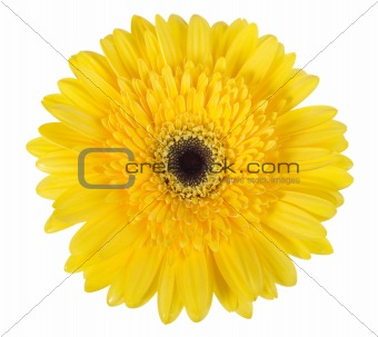 One yellow flower