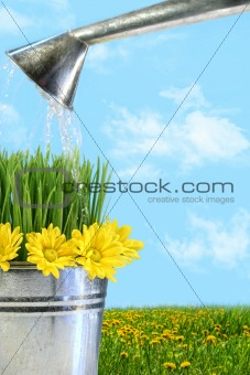 Watering flowers and grass for spring